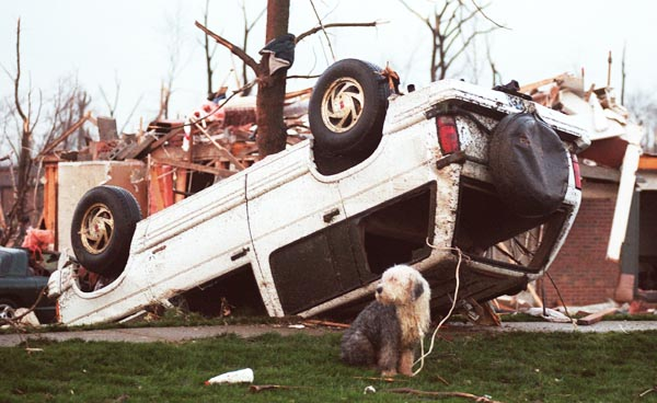A very dirty Blarney, the old English Sheepdog is sitting in front of a scene of devastation, and he is tied with a rope through the broken windows of an overturned Sport Utility Vehicle.