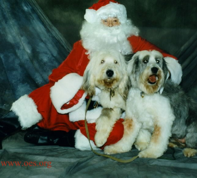 Santa Clause is half-lying on the floor with a professional studio background, holding and hugging two Old English Sheepdogs.