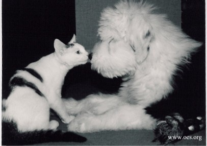 Black and white photo of a black and white cat nose-to-nose with a black and white Old English Sheepdog Puppy.