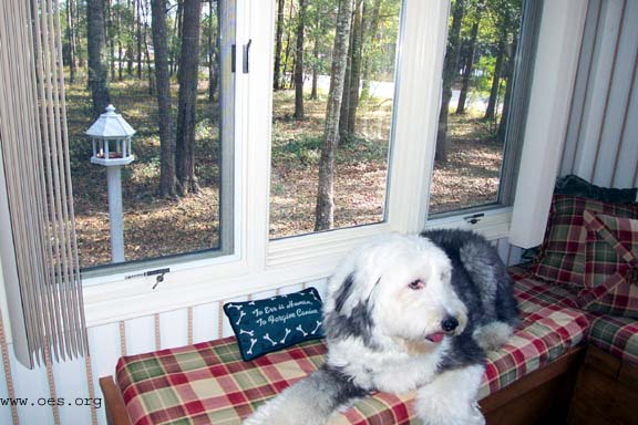 Sampson lying in a red plaid window seat with woods outside.