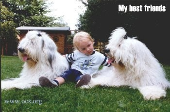 Two Old English Sheepdogs on either side of a little blond heaired boy. The photo is titled My Best Friends