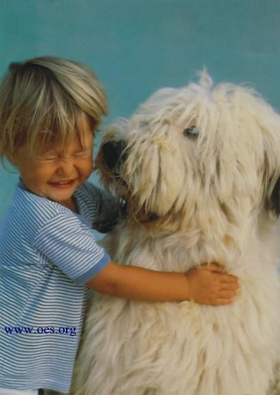 A little blond haired boy hugging a huge Old English Sheepdog, whose nose is at the same height as the boys face.  The boy is grimmacing, probably in reaction to a big sloppy wet kiss.