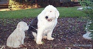 Widget the Old English Sheepdog looks at a little concrete statue of an Old English Sheepdog